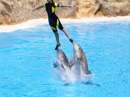 Delfinshow 7